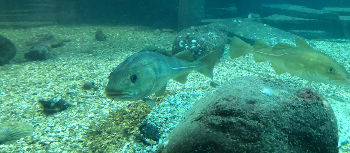 Risør Aquarium is Sørlandet's only saltwater aquarium