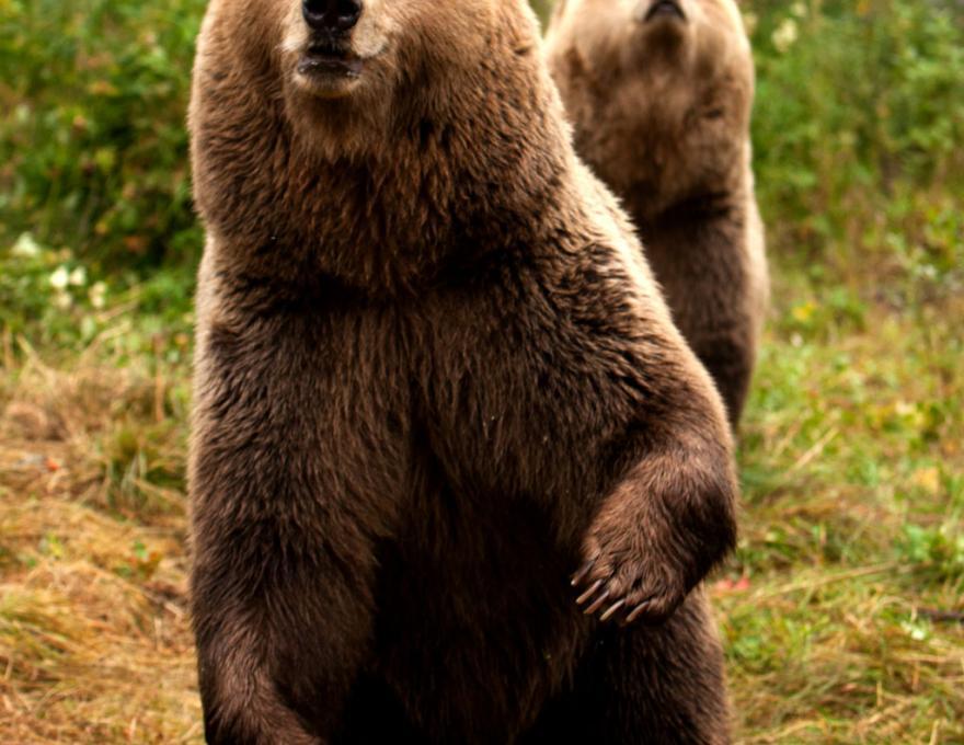 © Polar Zoo
