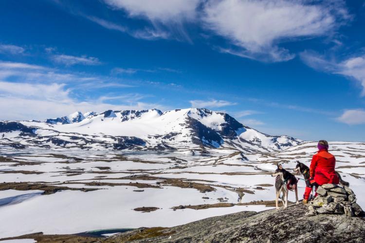Vanaf de top van Sognefjellsvegen is er een prachtig uitzicht op de bergmassieven in Jotunheimen. Foto: Werner Harstad / De Noorse Dienst voor Openbare Wegen
